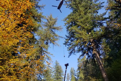 North Fork Helicopter Large Woody Debris Project