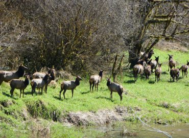 Spring in the Siuslaw