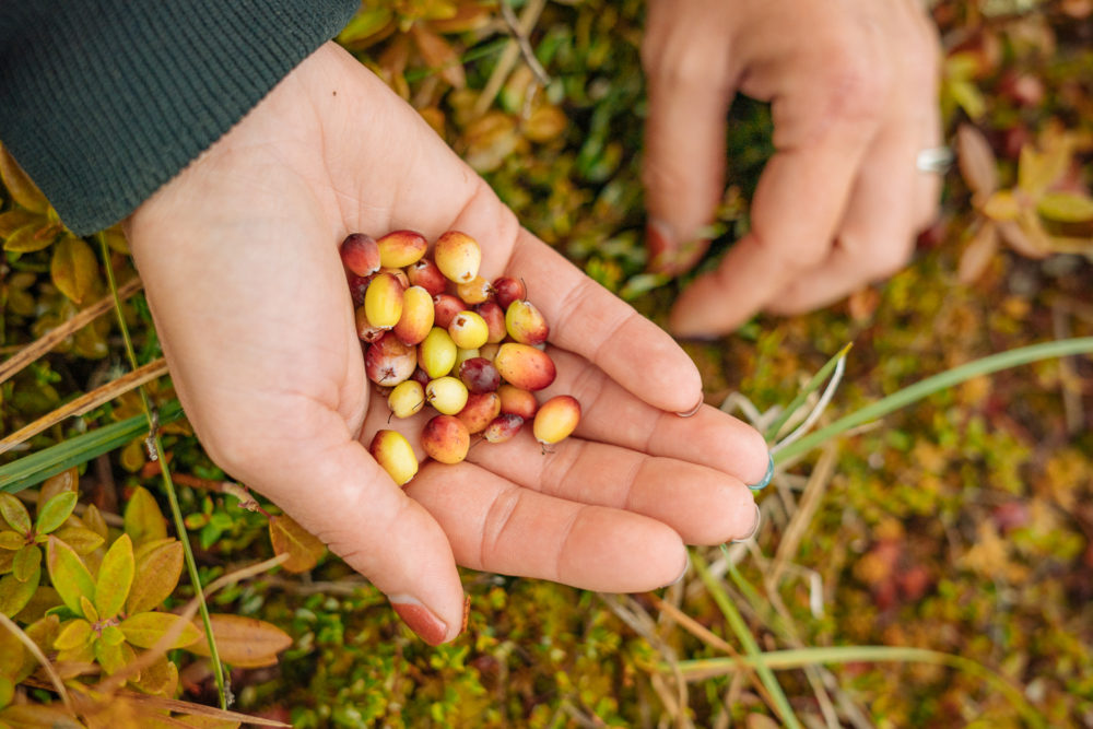 Growing Your Farm or Ranching Business from Small to Midsized