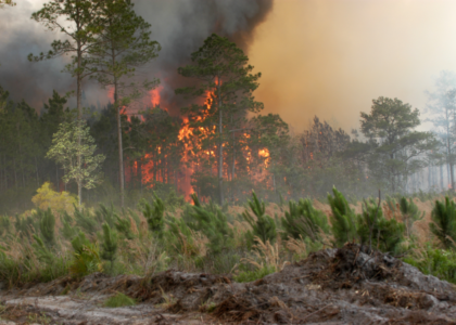 Forest Fire Ecology & Management