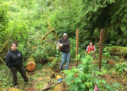 Project Update – North Fork Siuslaw Revegetation