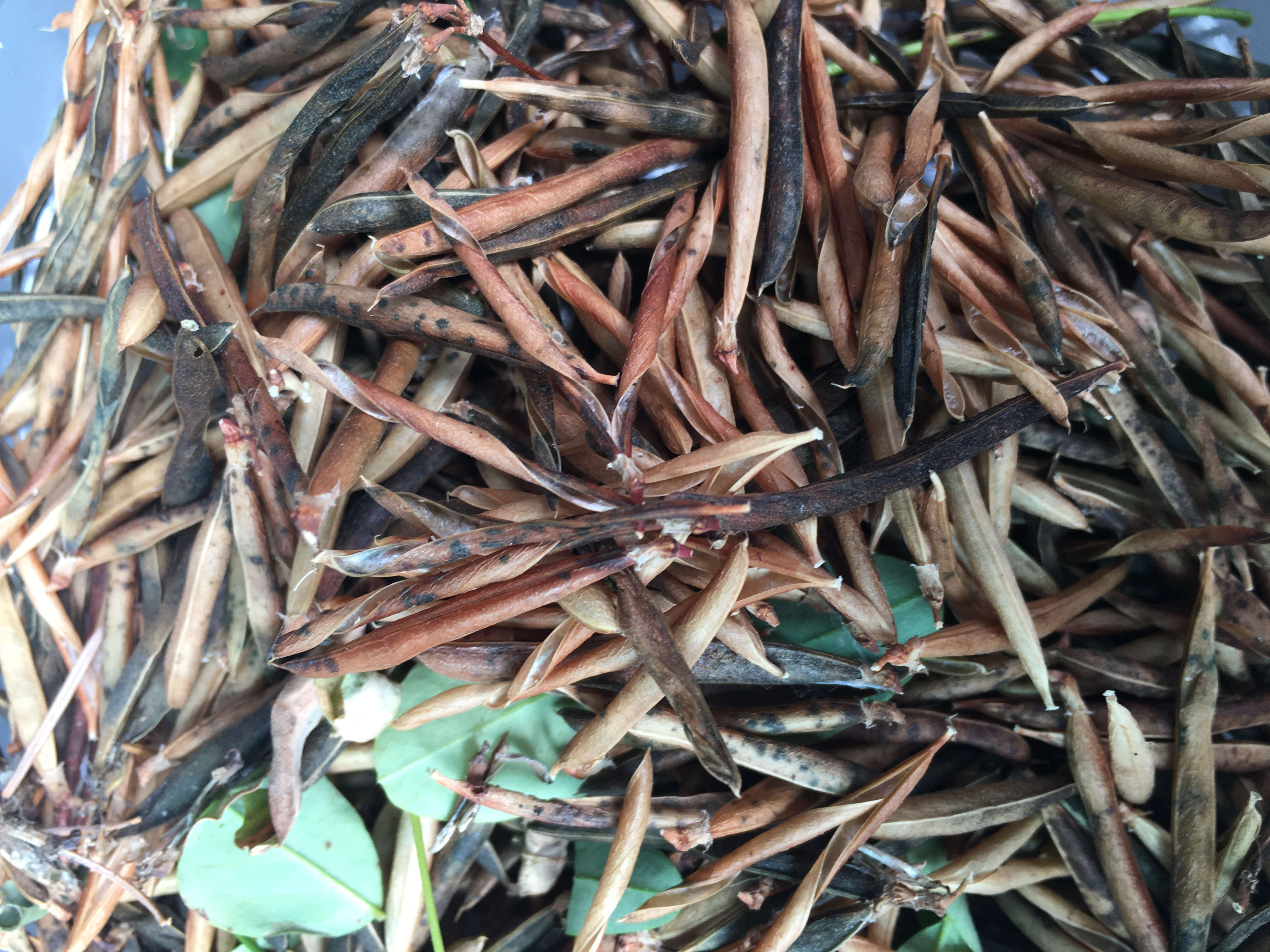 Help SWC Collect Seed for Restoration in Western Oregon
