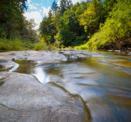 SWC's July 2021 Watershed Community Meeting: July 28th, from 5:30-7:00 PM, on Zoom